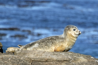 Common-Seal-Gallery-1