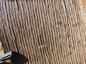 Huge Sigillaria outer bark (1)
