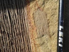 Huge Sigillaria outer bark (B)