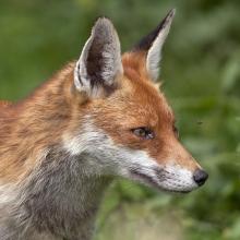 Fox-Derek-Bilton