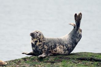Grey-Seal-gallery-1
