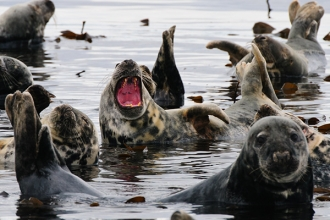 Grey-Seals-gallery-2