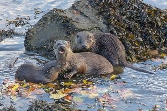 Otter-family-JG
