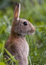 Rabbit-Derek-Bilton