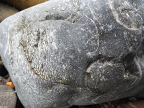 Crinoids and productids in Limestone