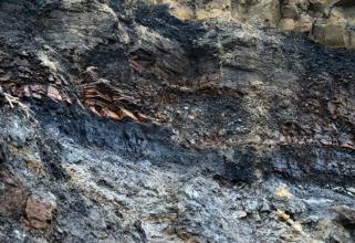 coal measureA