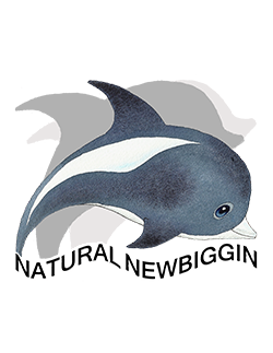 The Logo from Natural Newbiggin
